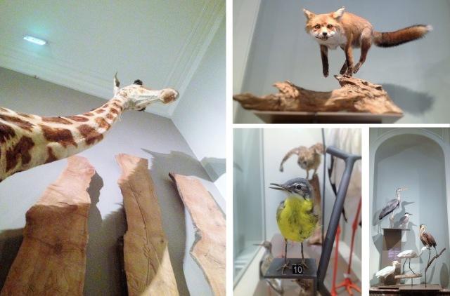 Musée d histoire naturelle15