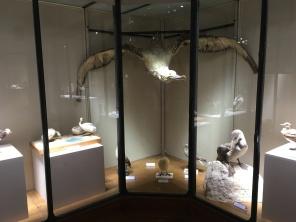 Albatros, vitrine du musée océanographique /cultivetaculture