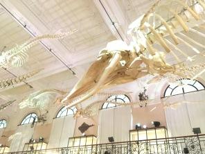 Détails du plafond, galerie histoire naturelle du musée de Monaco /cultivetaculture