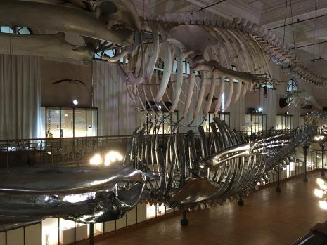 Philippe Pasqua, baleine /cultivetaculture
