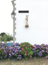 Hortensia /cutivetaculture