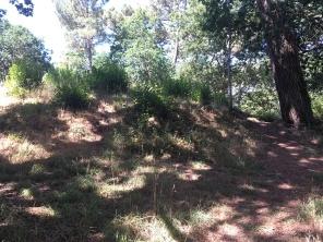 Le tumulus recouvert de végétation /cultivetaculture